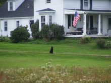 A Farmhouse and a Black Lab