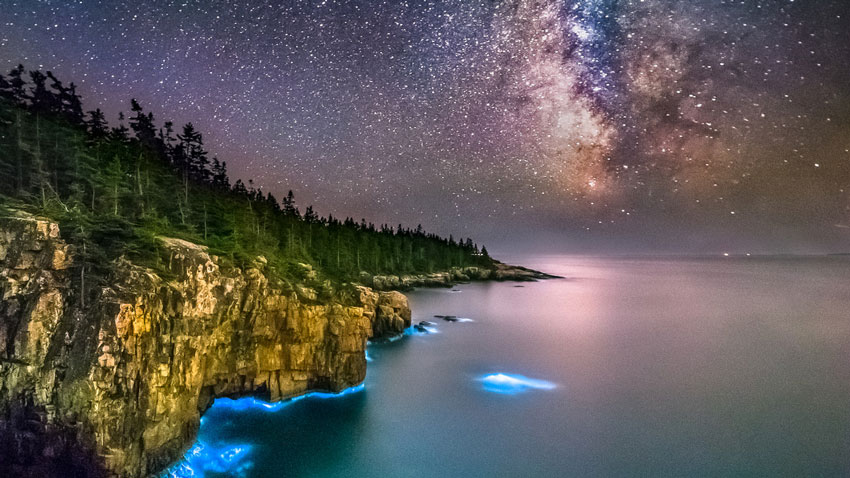 bioluminescence in acadia