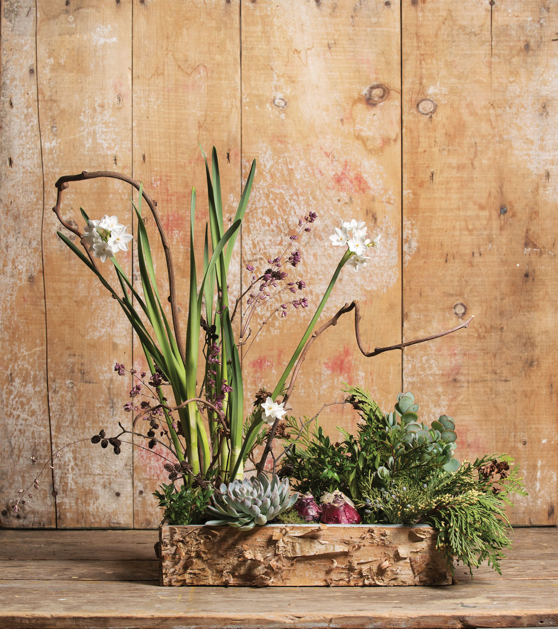 forced bulbs and backyard greens by Beth Renault of Floret on Mount Desert Island