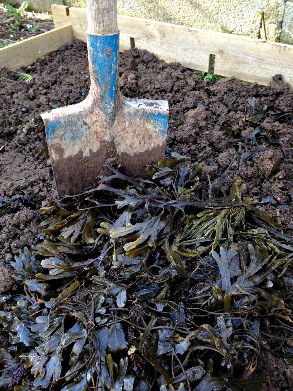 gardening with seaweed