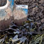 gardening with seaweed 101