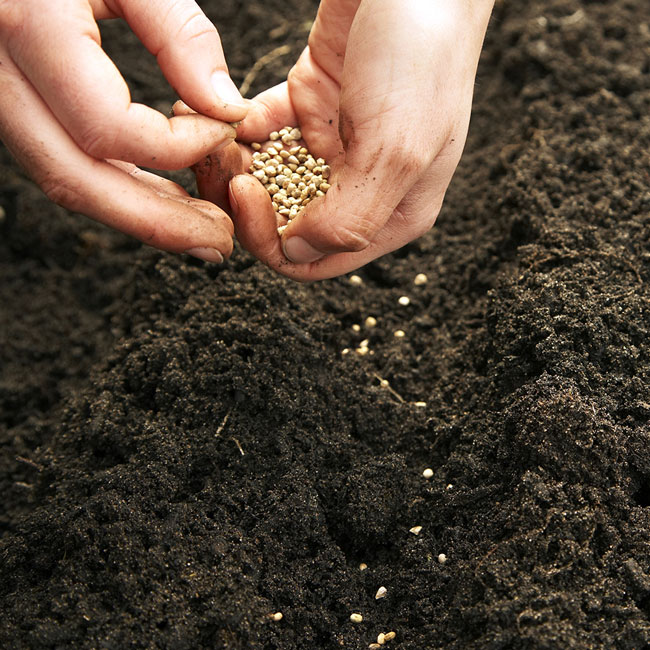 spring chores: sowing seeds
