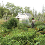 Guillermo Diaz and Bonnie Bochan created this Deer Isle garden using South American farming practices