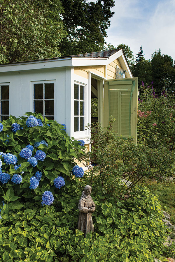 gardening shed and blue hydrangeas