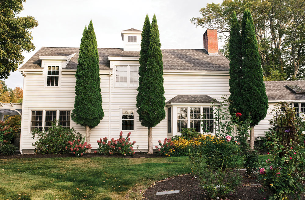 Arborvitae, pruned from the bottom to deter deer, punctuate the farmhouse