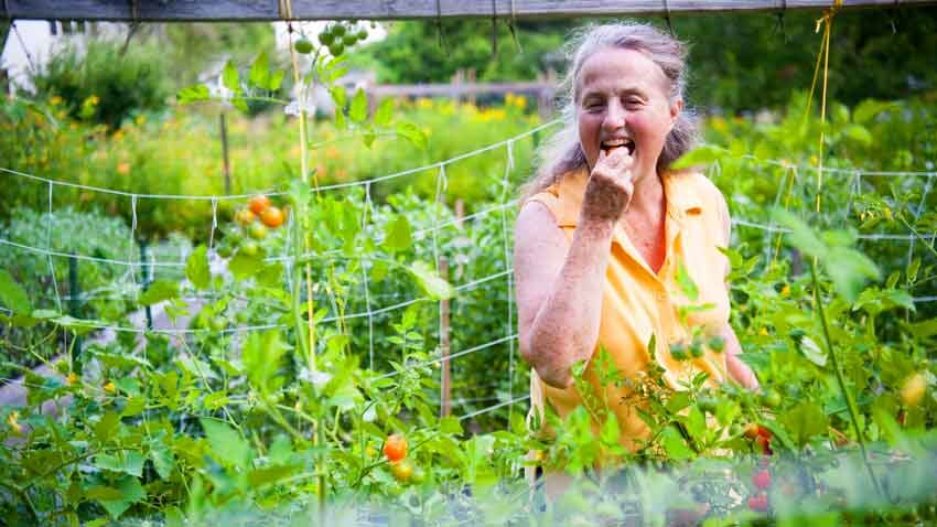 On the single-acre Ellsworth property Mary Blackstone's family has nurtured for 80 years, scallions and cherry tomatoes thrive in giant raised beds.