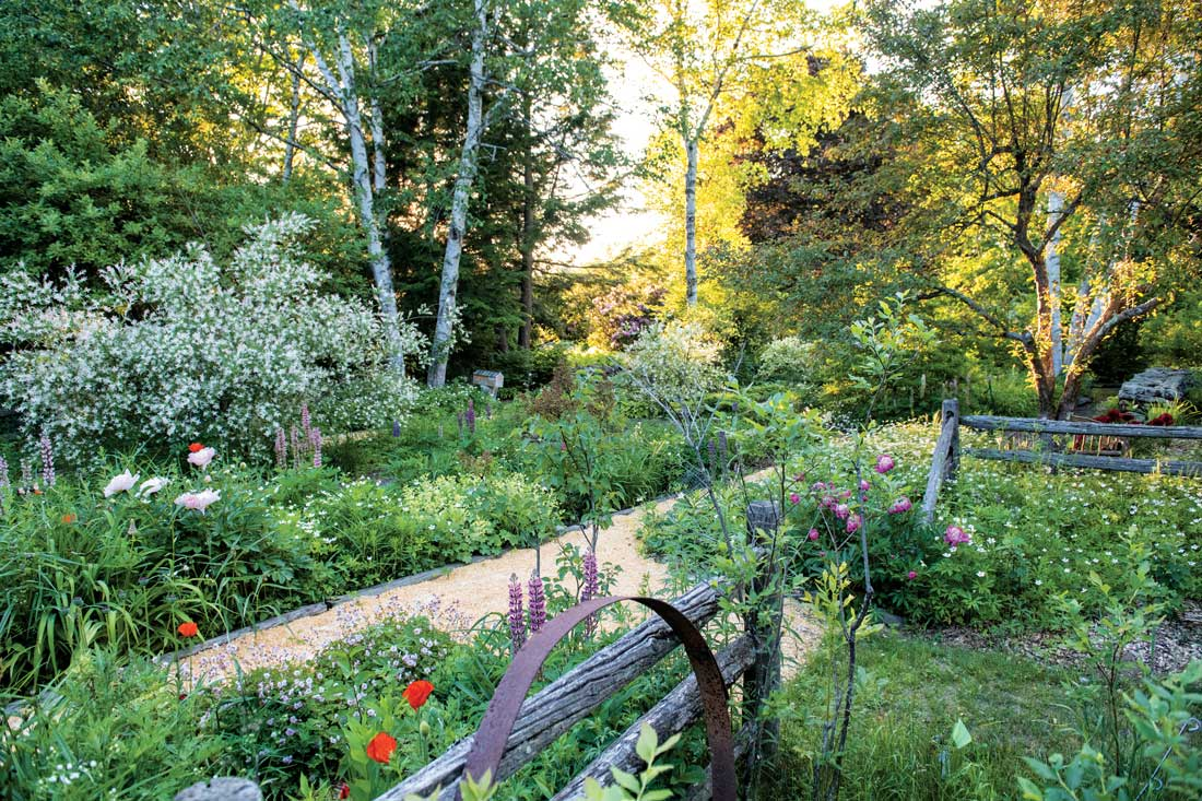 """Geraniums, lupines, peonies, poppies, and a variegated willow bloom along the Perennial Path, one of six garden """"rooms"""" on Linda Faatz's 30-acre Gorham property."""