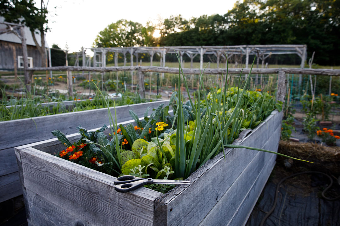 the property's small, raised vegetable garden