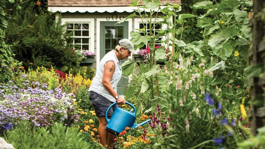 Leslie Clapp waters flowers in a cottage garden filled with herbs, vegetables, and annuals, including self- sowing sunflowers that rise 18 feet.